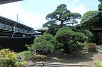 MASUMI YOGA 7月開催のお知らせ